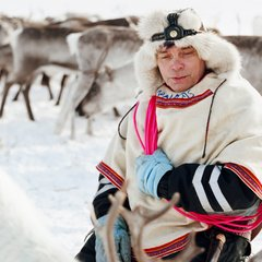 Sami Walking with Reindeer