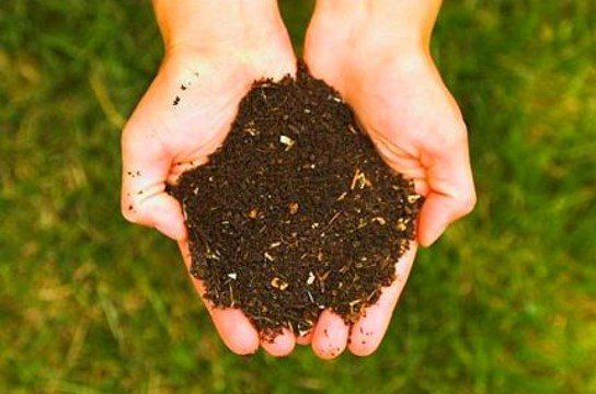 Key image for: Composting and Backyard Conservation August 25th